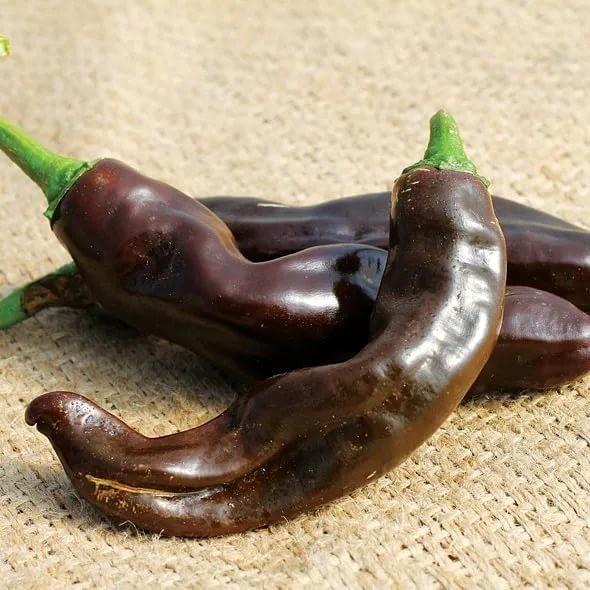 Ethiopian brown